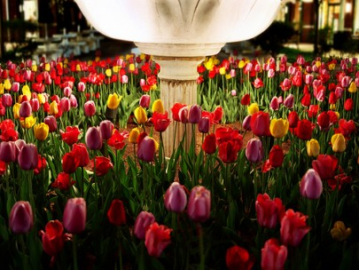 Tulips at Night by James Jordan